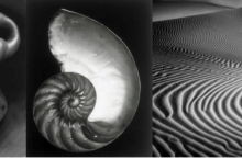Edwad Weston: ¡cuando un pimiento es arte!
