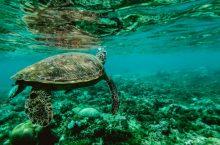Mejores cámaras acuáticas del 2018