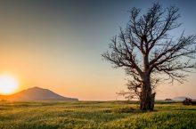 Golden Hour: planifica tus tomas y añade magia a tus fotos